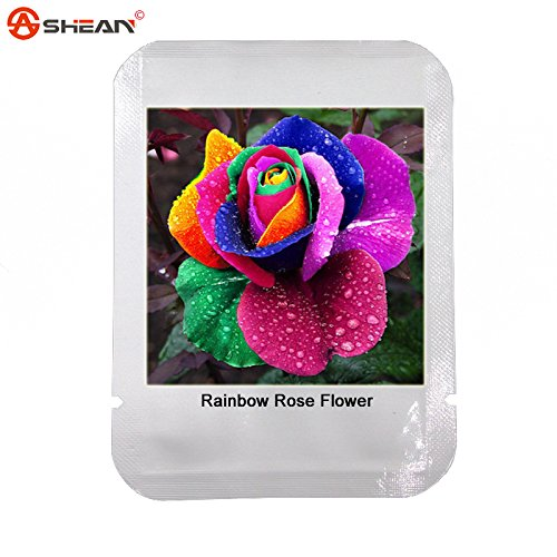 Graines Belles Graines Rainbow Rose multicolores Graines Rose Rose Fleur 100 Graines