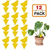 Stingmon 12 Pack Sticky Fruit Fly and Fungus Gnat Trap Killer Indoor