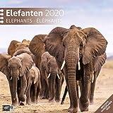 Elefanten 2020, Wandkalender / Broschürenkalender im Hochformat (aufgeklappt 30x60 cm) - Geschenk-Kalender mit Monatskalendarium zum Eintragen