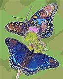 Vfvozr Art Paint by Number Kits Resumen Animal Dame DIY Óleo Pulgadas -Lienzo-Principiante Pintura acrílica y Pinceles para niños niños 40x50cm Sin Marco