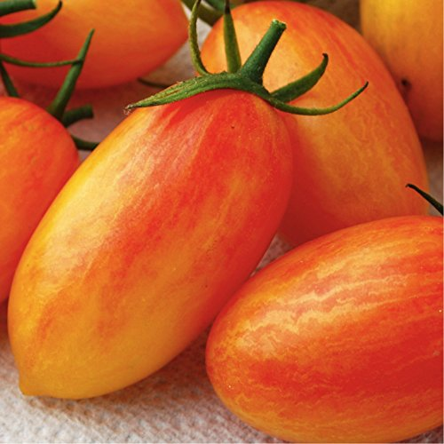 blush tomato seeds - 1
