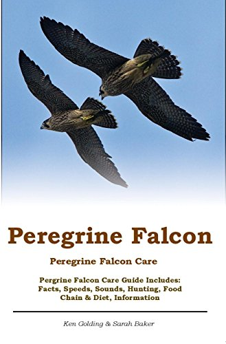 Peregrine Falcon Peregrine Falcon Care Pergrine Falcon Care Guide Includes Facts Speeds Sounds Hunting Food Chain Diet Information Golding Ken Baker Sarah Amazon Com