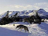 大人のパズル500ピース山の雪の中のオオカミ動物クリスマスプレゼント52x38cm