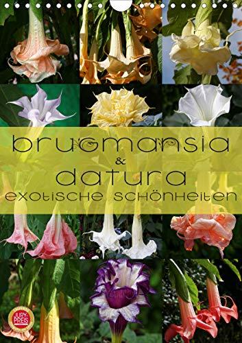 Brugmansia & Datura - Exotische Schönheiten (Wandkalender 2021 DIN A4 hoch)