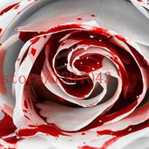 200 PCS ROSE GRAINES Graines Rarest Blanc Sang Rose Fleur Plante Flower Garden Asaka Vrai fleur Rare pour la maison jardin