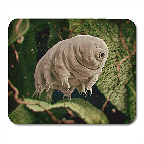 Mouse Pad Rubber Mini Rectangle Tardigrada Tardigrade Water Bear 3D Rendered Moss Mousepad Smooth Gaming Notebook Computer Accessories Backing