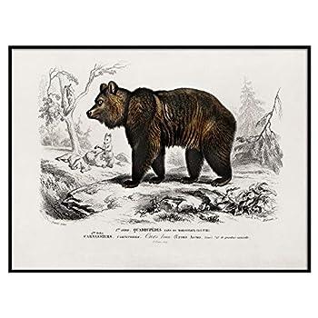Brown Bear Print Antique Animal Painting Vintage Drawing Poster Wall Art Decor Bear Old Illustrations Animal Wall Artwork | C146 8.5x11