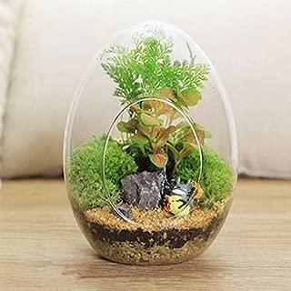 Global Brands Online En Forma de Huevo Musgo Bricolaje Micro Paisaje Botella de Vidrio de Plantas suculentas florero la Decoraciã³n del hogar