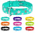 "WAUDOG Reflective Leather Dog Collar - Durable Dog Collars for Small Medium Large Dogs Puppy - Red Blue Pink Purple Green Black Safety - Soft Padded - Stars Plus (Large 18"" - 23"" Neck, Mint Green)"