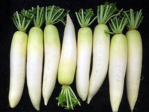 RWS 100 graines de graines de radis japonais, radis daikon, radis géant, radis d'hiver