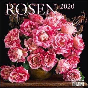 Rosen - Kalender 2020 - DuMont-Verlag - Broschurkalender mit bezaubernden Bildern und Platz für Eintragungen - 30 cm x 30 cm (offen 30 cm x 60 cm)