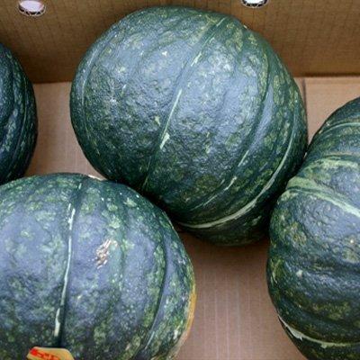かぼちゃ 北海道 1箱10kg(4-6玉入)