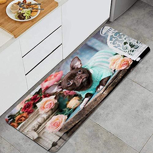 VAMIX Tappeto da Cucina,Cucciolo domestico chihuahua carnivoro adorabile sorpreso cucciolo nano animali fauna selvatica,antiscivolo passatoia da cucina antiscivolo zerbino tappetino per il bagno