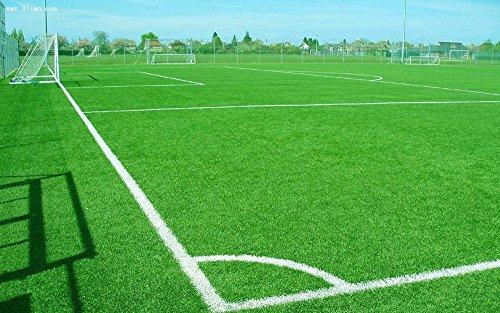 Gazons Seeds, golf, terrains de football, Villa, catégorie spéciale Graines Evergreen gazon, 500 PC Fleurs de haute qualité et les graines h36