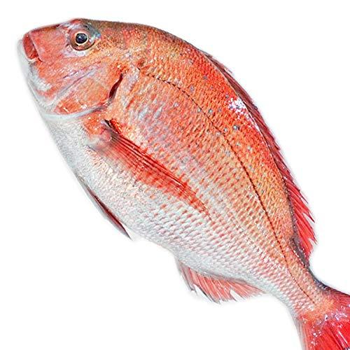 魚水島 天然真鯛 マダイ 桜鯛 日本海産 1.0〜1.4キロ物