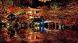 BCDJYFL Puzzle de 1000 Puzzle Creativo Puzzle Preciosos Productos de jardín japonés niños decoración del de Ejercicio Cerebral