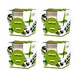 pajoma Duftkerze 4er Set, Bambus, im satinierten Glas, 4x 124 g, Brenndauer: 25 Stunden, in edler Geschenkverpackung -