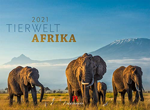 Tierwelt Afrika Kalender 2021, Wandkalender im Querformat (45x33 cm) - Tierkalender