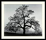 Framed Wall Art Print Oak Tree, Sunset City, California, 1962 by Ansel Adams 26.75 x 22.75 in.