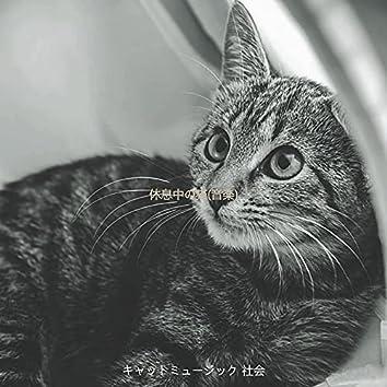 休息中の猫(音楽)