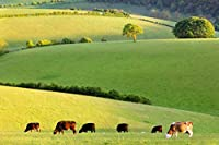 牧草地の牛300ピース木製ジグソーパズル家族向けゲームプレイコレクションに最適