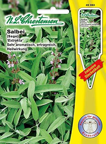 Salbei 'Extrakta' sehr aromatisch, ertragreich, Heilwirkung (mit Stecketikett)