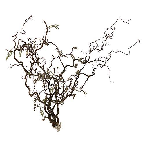 Korkenzieherhasel - Bündel (5 Zweige) Echte Dekoäste Osterstrauß Oster-Tischdeko - Frühlingszweige, Size_Name:60 cm
