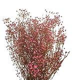 Paniculata preservada Color Rosa.Ramo Novia. Flores Naturales para Boda y Decoración. Ramos de Flores preservadas.Flores secas tratadas.Flor eterna. Paniculata para Novia
