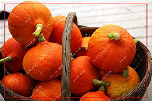 Graines de citrouille rares Cucurbita fil d'or de citrouille non-OGM légumes jardin Bonsai plantes ornementales semences Escalade 10 Pcs/sac 20