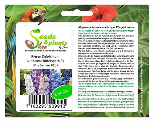Stk - 25x Riesen Delphinium Cultorums...
