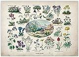Cartel educativo botánico Setas Champiñones Identificación Gráfico de referencia Diagrama Ilustración Arte de la pared Lienzos 40x60cm / Sin marco-B