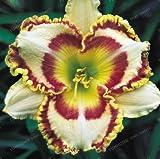 100 unidades por bolsa de semillas híbridas de lirio diurno de bonsái, semillas de flores hemerocallis lirio para interiores, suministros de jardín para el hogar 20
