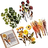 Pegatinas Scrapbooking, 24PCS PET Pegatina de decoración con Plantas y Flores Naturales, Vintage Adhesive Stickers para Craft Scrapbook Album, Calendars Planner, DIY, Bullet Journal(Gran Tamaño)