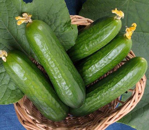Gurke Muncher - sehr ertragreich - 20 Samen