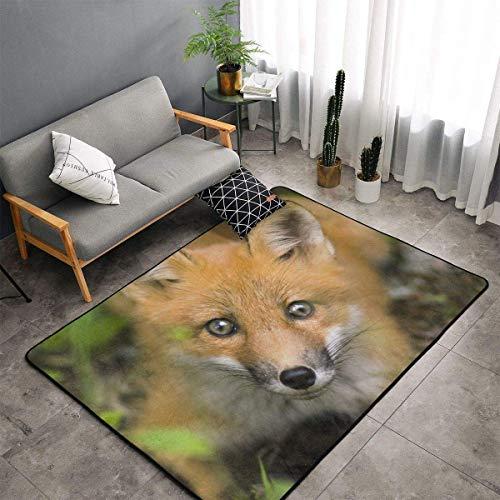 Comfort&products Alfombras de cocina, felpudos peludos, para bebés y niños, manta de baño, alfombra de baño, diseño de zorro animal