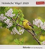 Heimische Vögel Postkartenkalender 2020. Wochenkalendarium. Blockkalender. Format 16 x 17,5 cm