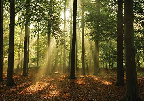 Forwall Fototapete Vlies Tapete Wanddeko Wald Natur - Bäume Sonnenstrahlen Grün Moderne Wanddekoration Wandtapete 10331V8 368cm x 254cm Schlafzimmer Wohnzimmer