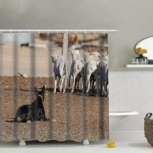 Meiya-Design australische Kelpie Hund Arbeitsumzug Schaf Tiere Wildlife Action Natur Duschvorhang mit Haken 182,9 x 182,9 cm Duschvorhang für Badezimmer Zuhause Dekor
