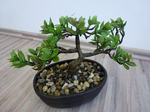 Homestyles 172113-50 Pfennigblatt Bonsai Kunstpflanze F52