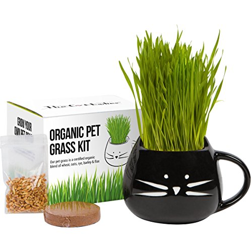 Cat Grass Growing Kit
