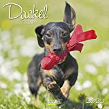 Dackel 2020: Broschürenkalender mit Ferienterminen. Hunde-Kalender. 30 x 30 cm