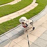 Silla De Ruedas Mediana para Patas Traseras, Carrito para Perros, Reparación Postoperatoria, Gatos Discapacitados, Conejos Paralizados, Animales Discapacitados, 2 Ruedas, 10-20 Kg