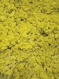 Liquen preservado Paquete 250 Gramos. Color Amarillo. Musgo liofilizado Amarillo. Origen España.