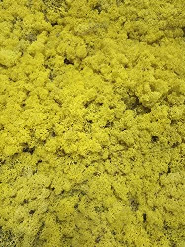 Eternaflor Muschio Finlandia. Muschio di Renna preservato. Muschio liofilizzato. Confezione da 500 Grammi. Colore: Giallo.