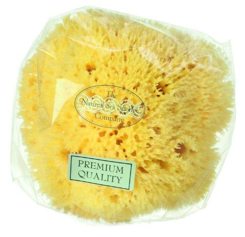 Hydrea London Nid d'abeille de Bain éponge de mer pour 5 à 14 cm