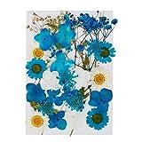 Gobesty Naturali Pressati Fiori, fiori secchi naturali Arte fai da te Decori floreali Collezione Regalo Fogliame Artigianato floreale, Blu