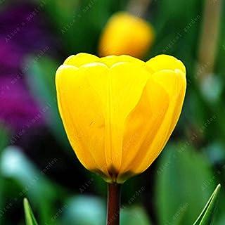 Go Garden ZLKING 2 piezas Bulbos chinos de tulipán 10 colores Mezcla Flor de Bonsái Plantas de interior Flores Plantas de jardín de casa de Países Bajos: Amarillo