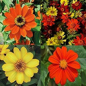 100 Pcs Daisy Garden Zinnia Zahara Raspberry Lemonade Flower Seed Mix Non GMO Bonsai Decoration