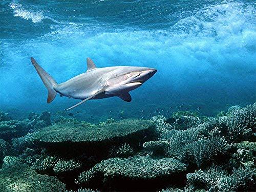 Pintura sobre Lienzo sobre Tinkers de tiburón Marino Navidad, Año Nuevo, Día de San Valentín, Regalos Decorativos o marcosóleo Pintura al-No Frame-40x50cm