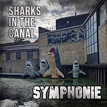 Sharks In The Canal